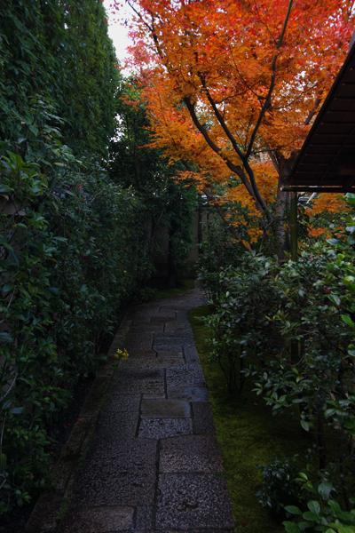 黄梅院(大徳寺塔頭)_e0051888_17522435.jpg