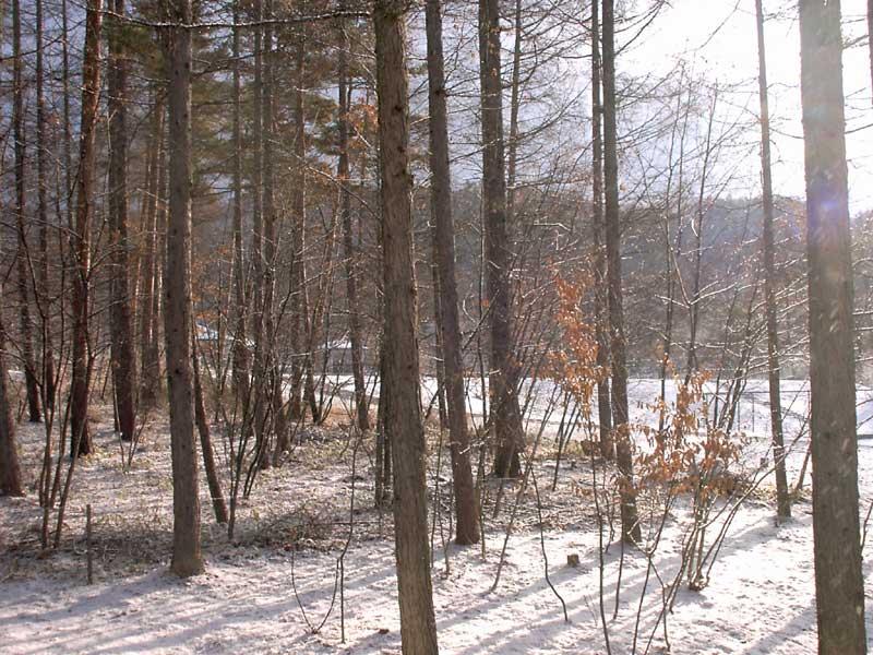 6日は雪でしたが 今は 快適な日常です。_d0109415_21345965.jpg