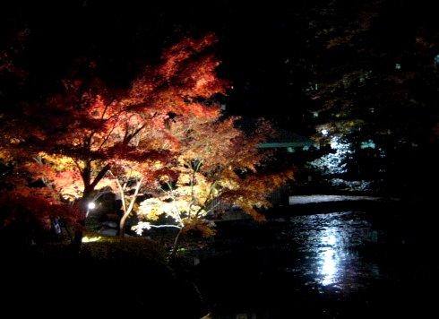 ライトアップさらた大田黒公園を歩いたよ_c0150923_19253180.jpg