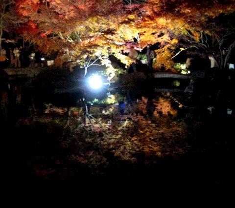 ライトアップさらた大田黒公園を歩いたよ_c0150923_19264376.jpg