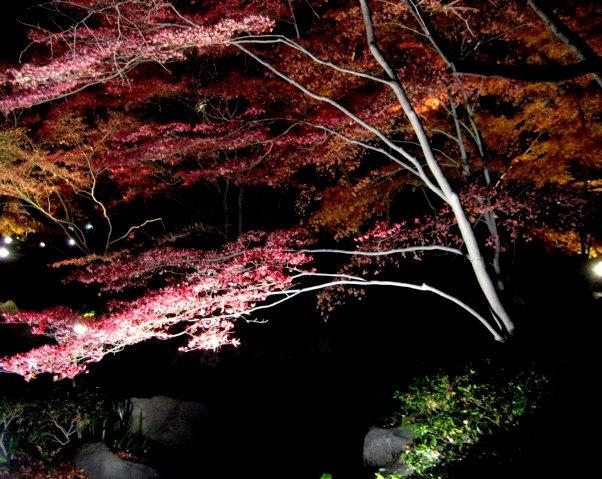 ライトアップさらた大田黒公園を歩いたよ_c0150923_19275266.jpg