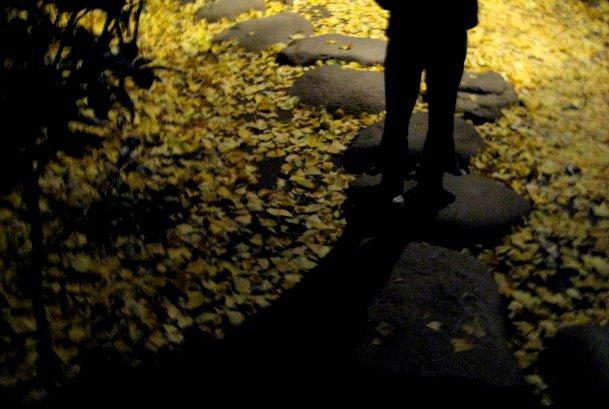 ライトアップさらた大田黒公園を歩いたよ_c0150923_19283491.jpg