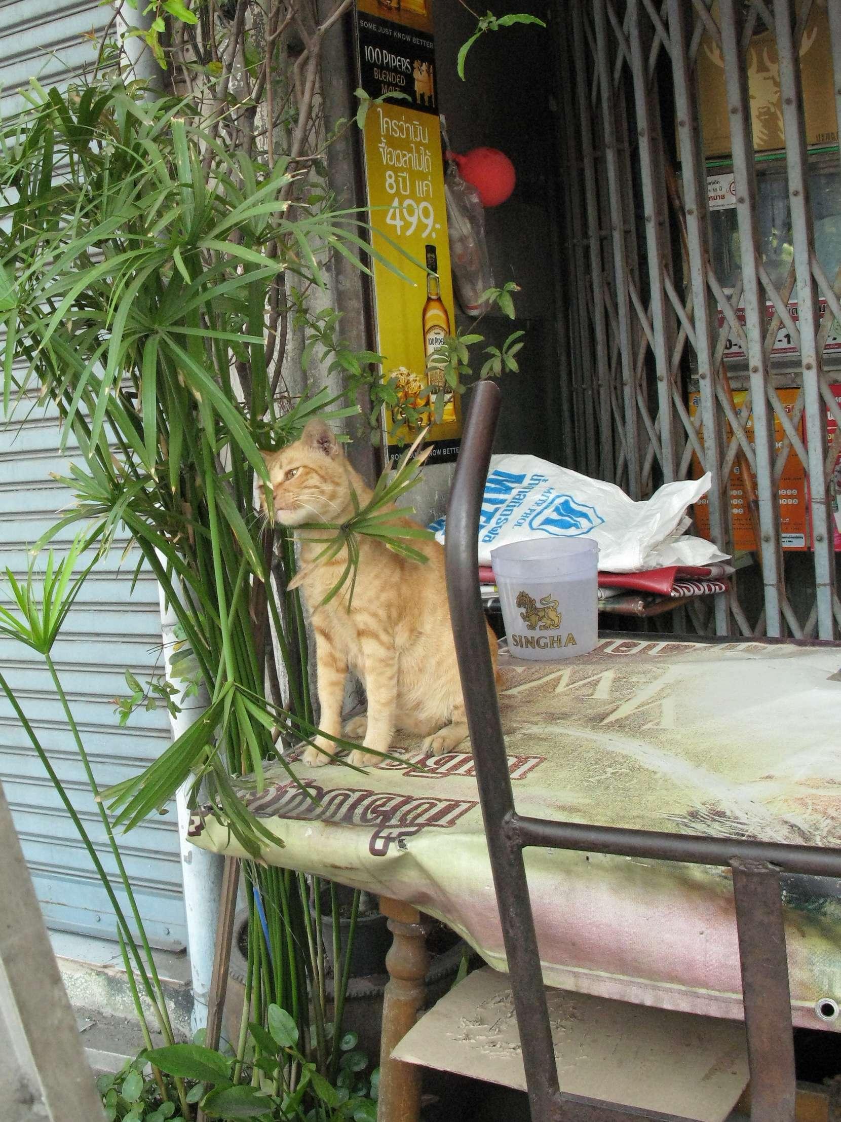 タイ - 7回目(その4) 散歩_b0069128_6531369.jpg