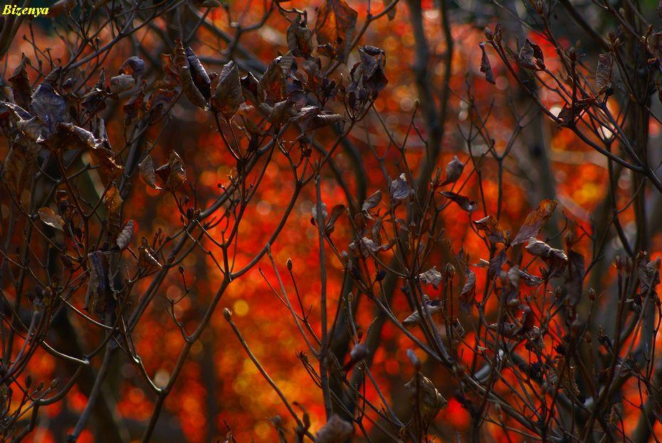 秋と冬の狭間・・・・_d0086248_11593955.jpg