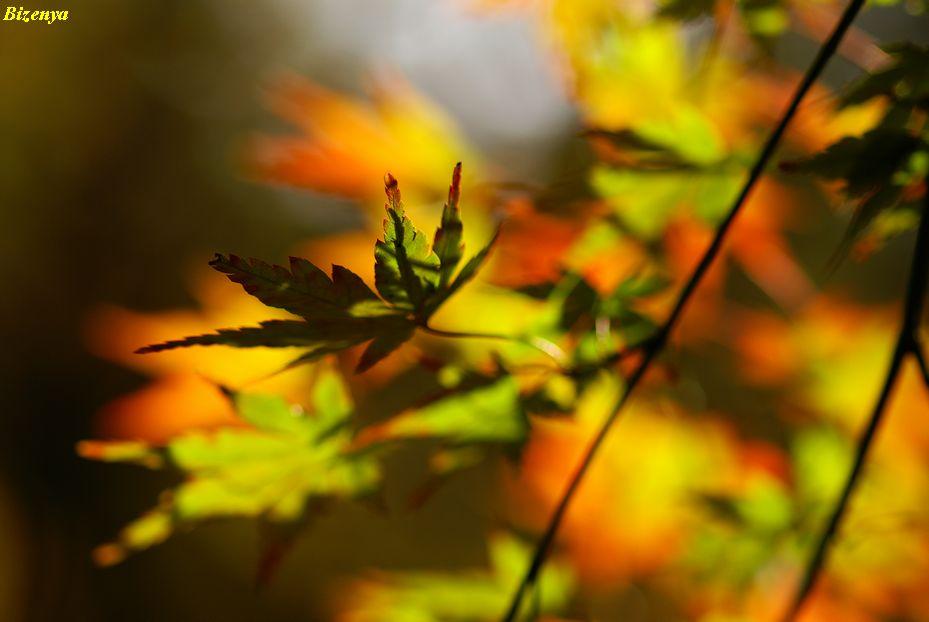秋と冬の狭間・・・・_d0086248_1202982.jpg