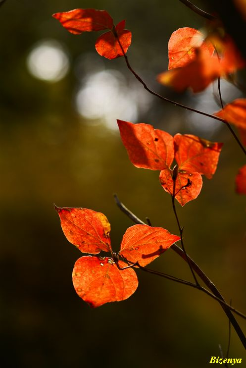 秋と冬の狭間・・・・_d0086248_1204810.jpg