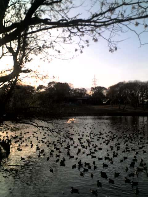 大沢池の冬_d0129766_1552134.jpg