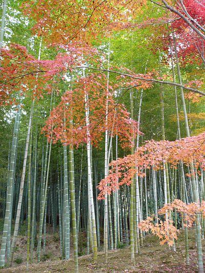 京都紅葉・・・2_d0078486_23431430.jpg