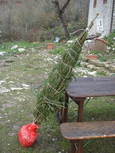 それでも、結局クリスマスツリー(笑)_f0106597_3162817.jpg