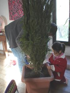それでも、結局クリスマスツリー(笑)_f0106597_3303292.jpg