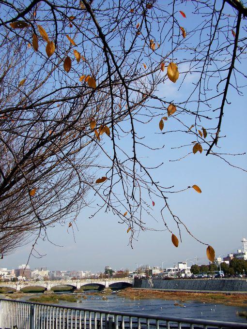 「初冬・塩小路橋から見た鴨川」_d0133024_212992.jpg