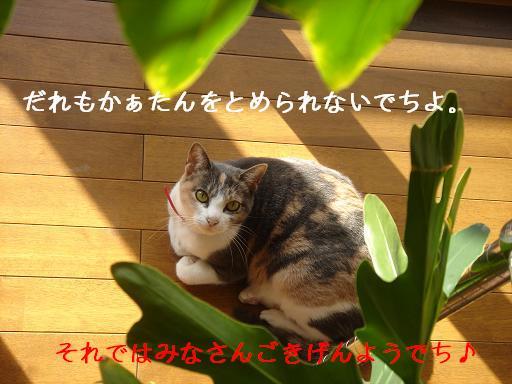 f0131535_14144081.jpg