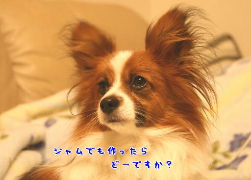 d0013149_0205215.jpg
