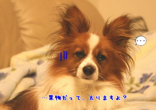 d0013149_030484.jpg