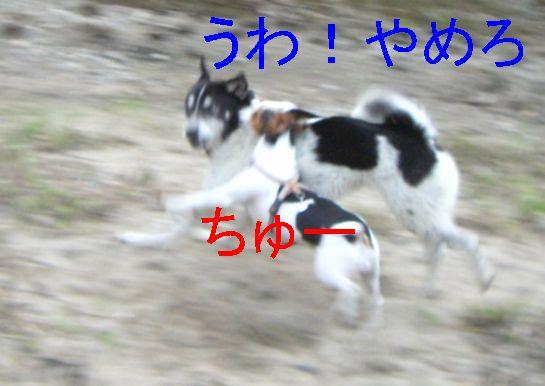 f0053952_2010024.jpg