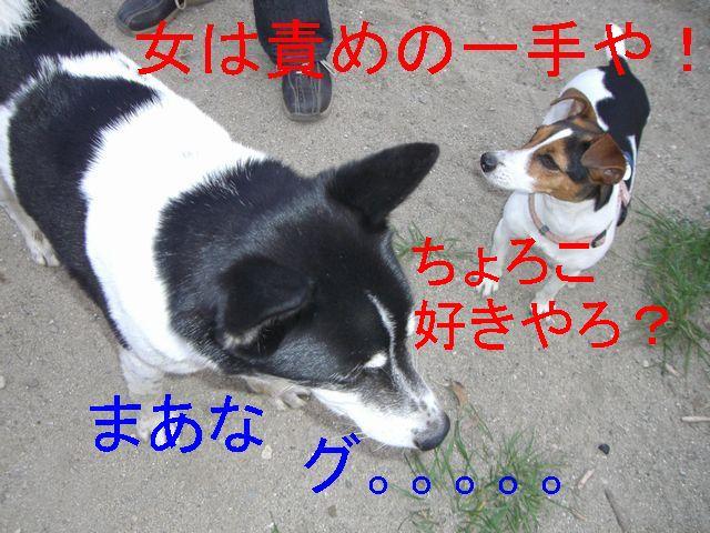 f0053952_2011166.jpg