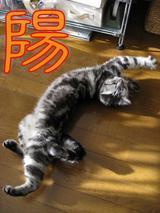 今年の猫字(ニャン字)まつり 2007_d0132661_12593130.jpg