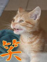 今年の猫字(ニャン字)まつり 2007_d0132661_1392675.jpg