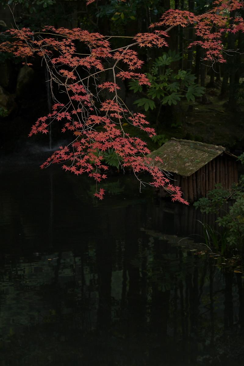紅葉 2007 <南禅寺 天授庵> 6_f0021869_22232595.jpg