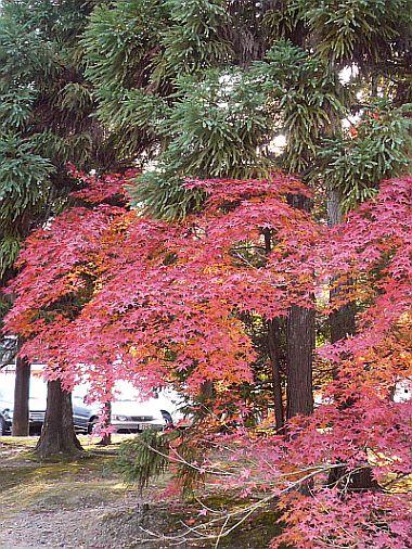 京都紅葉・・・2_d0078486_054487.jpg