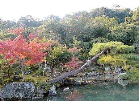京都紅葉・・・2_d0078486_756409.jpg