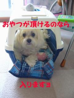 f0145192_1601683.jpg