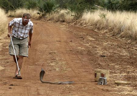 ★ケニアで2.7mの新種の「ドクハキコブラ」が発見される!!_a0028694_2127577.jpg