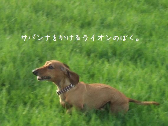 f0028197_1912286.jpg