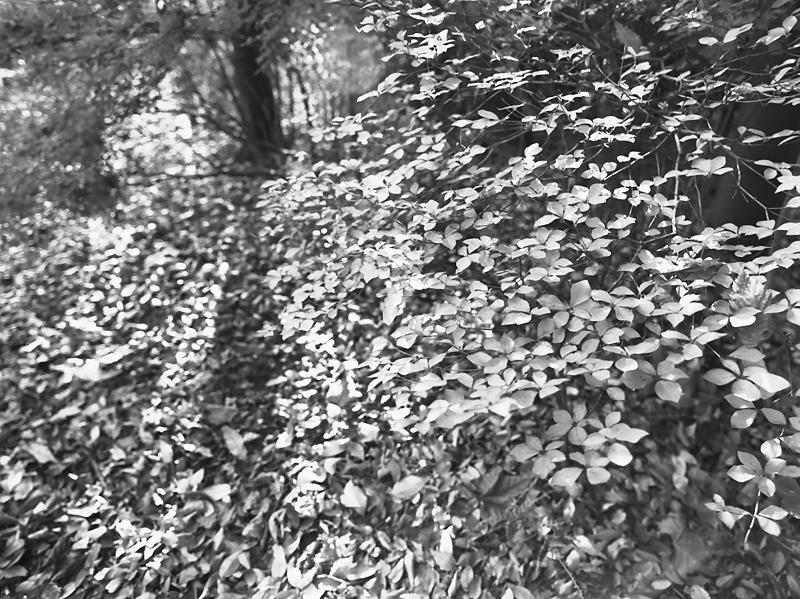 f0109201_19562022.jpg