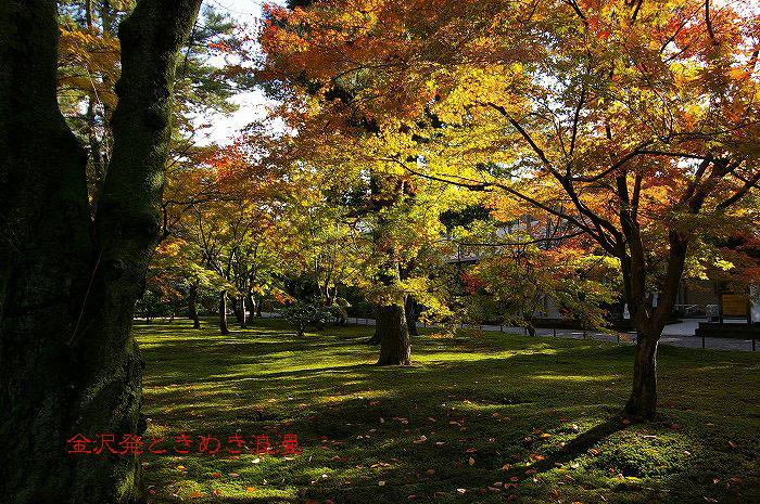 紅葉の兼六園 山崎山周辺_d0043136_1232792.jpg