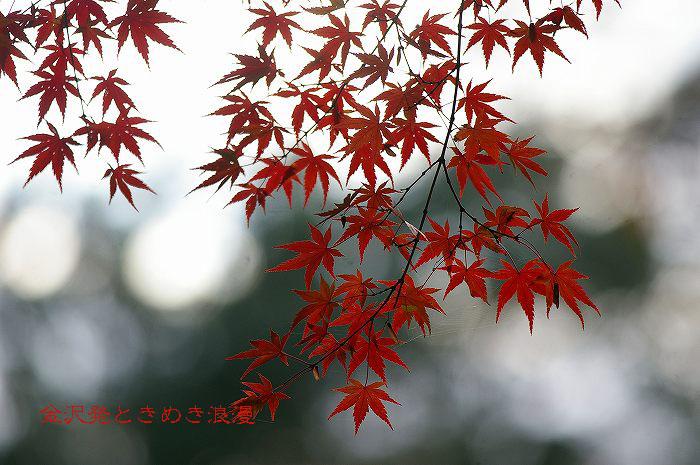 紅葉の兼六園 山崎山周辺_d0043136_1243588.jpg
