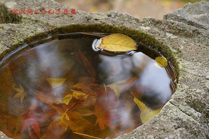 紅葉の兼六園 山崎山周辺_d0043136_1301399.jpg