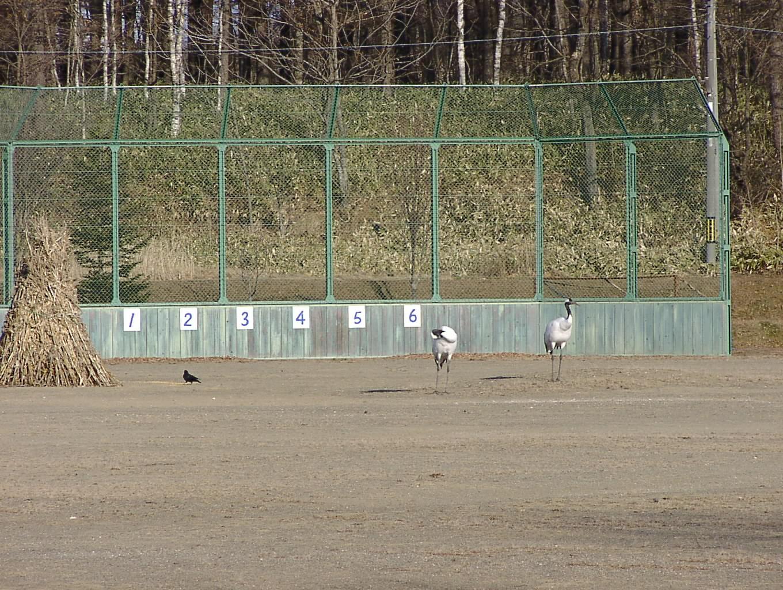 4番ピッチャー鶴田(ツルだっ!) 12月11日_f0113639_1883654.jpg