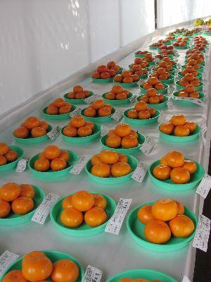 第6回げんきの郷「農畜産物品評会」 搬入_c0141652_1455677.jpg
