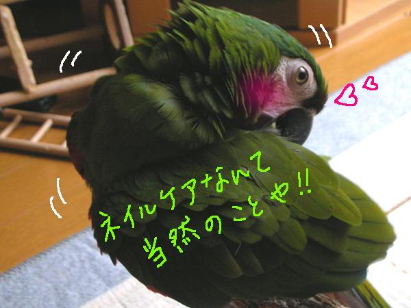 f0132055_13155938.jpg