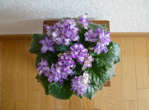 f0135269_614312.jpg