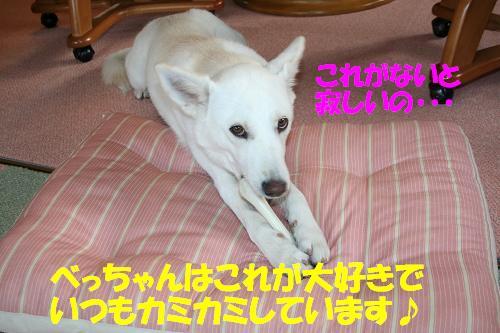 f0121712_2330523.jpg