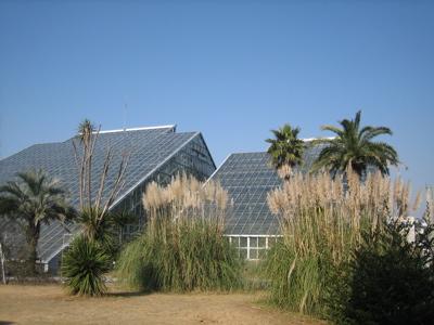 つくば植物園「ラン展」に_b0100229_1616512.jpg