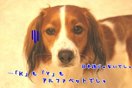 d0013149_232235.jpg