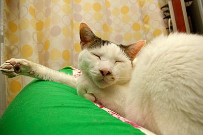 猫の手帖1月号_a0028451_12141040.jpg