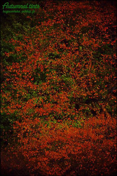 秋色キャンバス_f0100215_025227.jpg