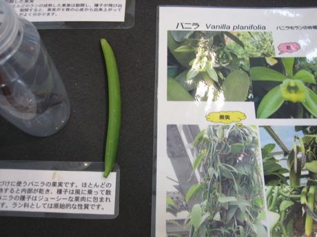 つくば植物園 ラン展 2_b0100229_8414385.jpg