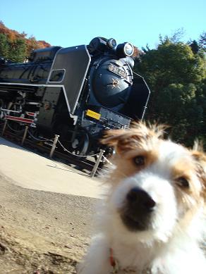 犬とトレッキングと芸術_c0099133_0195197.jpg