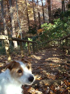 犬とトレッキングと芸術_c0099133_0282380.jpg
