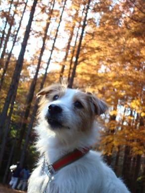 犬とトレッキングと芸術_c0099133_032263.jpg