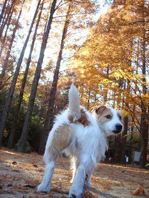 犬とトレッキングと芸術_c0099133_0343461.jpg