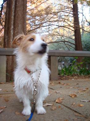 犬とトレッキングと芸術_c0099133_0382786.jpg