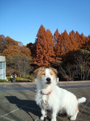 犬とトレッキングと芸術_c0099133_044249.jpg