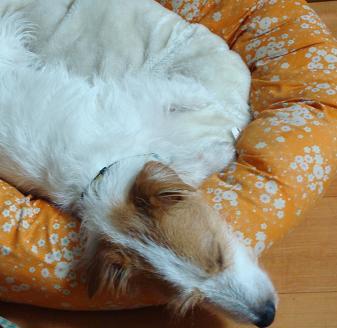 犬とトレッキングと芸術_c0099133_1133754.jpg
