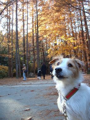 犬とトレッキングと芸術_c0099133_185615.jpg